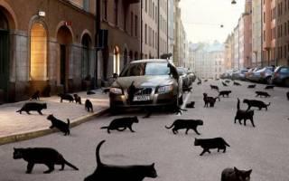 Приметы про кошек: опасен ли рыжий или чёрный кот, принесёт ли счастье трёхцветный и прочие