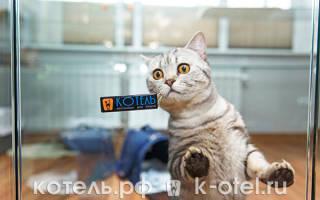 Гостиница для кошек: современные отели для животных и домашние передержки