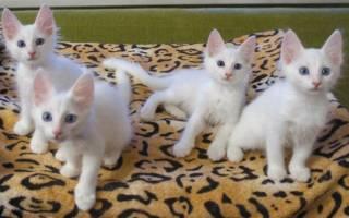 380 имен для белого кота или кошки (по полу, оригинально)