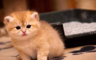 Пи Пи Бент — лучший наполнитель для кошачьего туалета