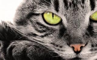 До какого возраста растут коты и кошки, возможные проблемы и методы их решения