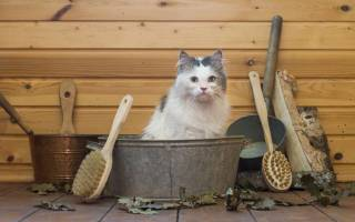 Как помыть кота, если он боится воды и царапается, как купать котенка в первый раз, почему кошки не любят воду, как часто их можно мыть