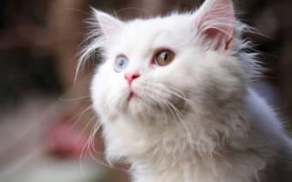Русские имена для кошек и котов (80+ вариантов)