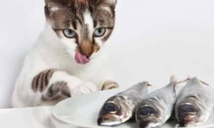 Кошачья двуустка — фото, симптомы заражения и лечение