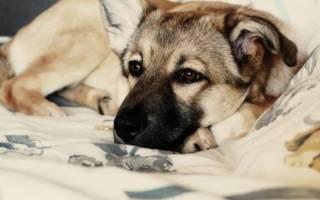 Сколько живут собаки дворняжки в домашних условиях и на улице — средняя продолжительность жизни