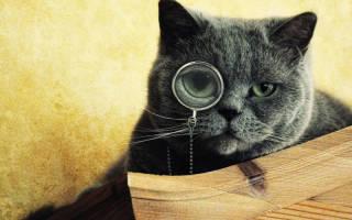 Самые умные кошки: рейтинг пород и критерии интеллекта питомца, отзывы владельцев и фото