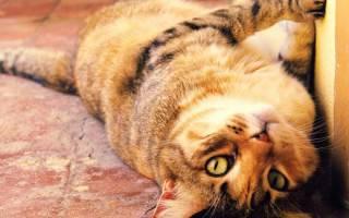 Здоровье кошки: 8 советов о том как сохранить и не навредить