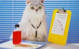 Фронтлайн для кошек: инструкция по применению спрея, каплей комбо, спот он, отзывы