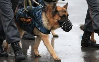 Служебные породы собак с фото, названием и описанием