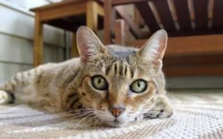Уролекс для кошек: инструкция по применению, аналоги, отзывы