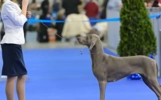 Классификация пород собак в системе кинологических организаций