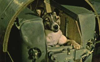 Лайка собака-космонавт — первая в космосе