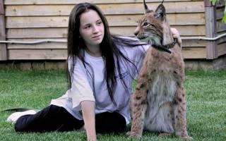 Породы кошек похожие на рысь [фото + список пород]