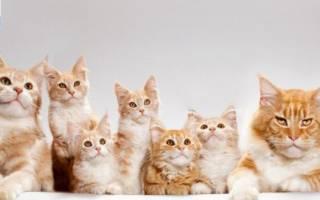 Ветеринарный паспорт для кошки: зачем нужен, оформление, цены