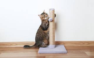Когтеточка для кошек: виды — домик, столбик, угловая и др, способы выбора и изготовления когтеточек для котов в домашних условиях, фото