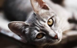 Имена для кошек: 500+ вариантов как назвать кошку красиво