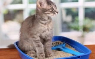 Наполнитель для кошачьего туалета: какой выбрать, виды (древесный, комкующийся, силикагелевый и др), рейтинг, их особенности и отзывы