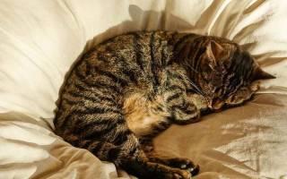 Сколько в сутки спят кошки, коты и котята, почему так много
