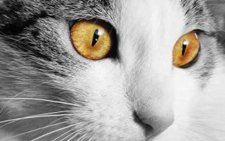 Витамины Доктор Zoo для кошек: 4 популярных вида, отзывы