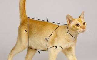 Одежда для кошек: как выбрать и самостоятельно пошить костюм для кота
