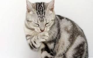 Аллергия на кошек и котов: симптомы и лечение