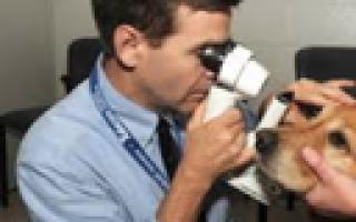 Корм для кошек Happy Cat (Хеппи Кэт) — отзывы и советы ветеринаров