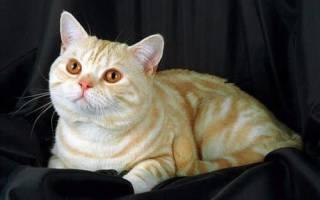 3 мифа о продуктах питания для кошек и котят