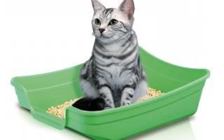 16 причин почему кот не ходит в лоток и что делать?