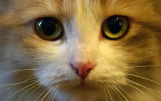 Самые красивые кошки в мире: рейтинг пород, фото котов и отзывы владельцев