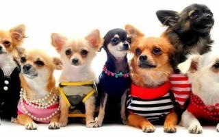 Породы собак для квартиры — названия, фото, описание