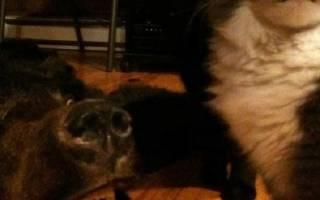 27 самых прикольных фото котов и кошек