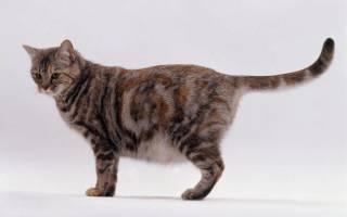 Как понять что Кошка Беременна [7 методов]