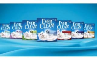 Ever Clean — наполнитель для кошек: состав, особенности и отзывы