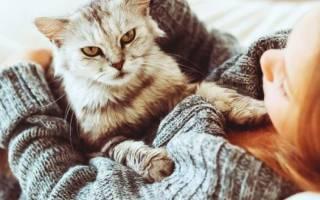 Аллергия на кошек: симптомы и лечение у взрослых, детей, беременных