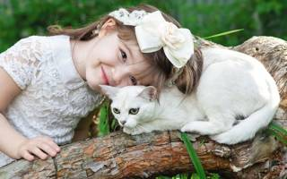 Кошка бурма: описание бурманской породы, характер и фото коричневого кота, выбор котёнка, уход за питомцем и содержание бурмилла