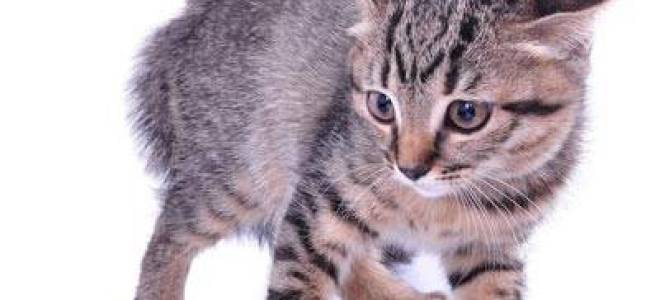 Стресс у кошки: Причины возникновение. Как снять стресс у кошки