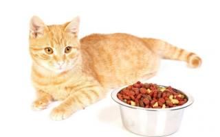 Холистик корма для кошек: рейтинг кормов, преимущества