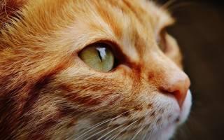 Прививки котятам: Календарь, когда делать первую прививку котенку