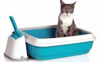 Туалет для кошки: как выбрать. 3 совета от заводчиков