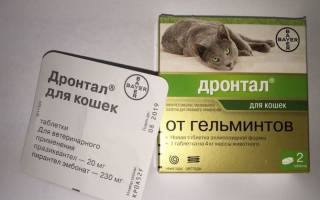 Фебтал для кошек и котов: инструкция по применению у взрослых животных и котят, отзывы