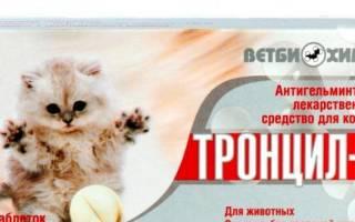 Тронцил К для кошек: способ применения, аналоги препарата, отзывы