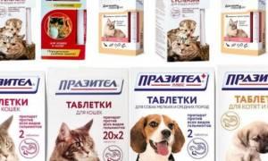 Празител для кошек и котов (таблетки и суспензия): инструкция по применению у взрослых животных и котят, отзывы, аналоги