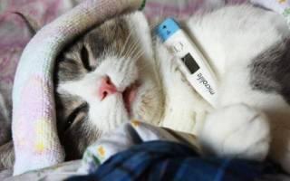 Глобфел-4 для кошек: инструкция по применению, отзывы, аналоги препарата