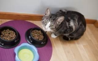 Чем кормить кошку после родов: особенности питания натуральной пищей и готовыми кормами, советы ветеринаров