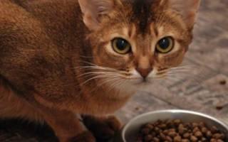 Корм для кошек «Бозита» (Bozita): отзывы ветеринаров и владельцев животных о нем, обзор состава, плюсы и минусы