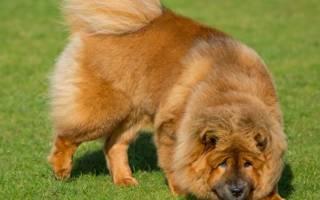 Самые опасные собаки в мире — 10 пород с фото и описанием