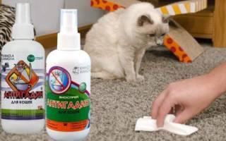 Антигадин для кошек: отзывы, как сделать своими руками, принцип действия и советы по применению