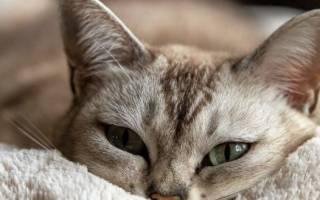 Что делать при внутреннем кровотечении у кошки: как распознать и чем помочь животному, советы ветеринаров