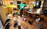 Короткошёрстные породы кошек: основные особенности гладкошёрстного кота