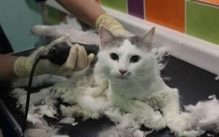 Машинка для стрижки кошек, в том числе с густой шерстью: особенности выбора и использования, как стричь кота — видео-инструкция